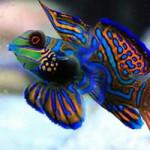 Aquariophile Tisha45