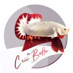 Aquariophile criibetta