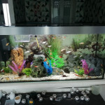 Aquariophile Aquariophiliste59