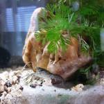 Aquariophile Oh-Bonne-Mer78