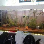 Aquariophile aurelien-peru