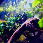Aquariophile Exotik