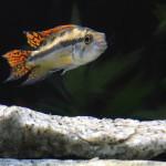 Aquariophile Thierry38