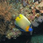 Aquariophile ColisaDUBOUCHON