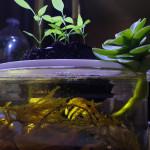 Aquariophile Floralik