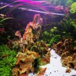 Aquariophile bubz