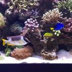 Aquariophile bigben-ben