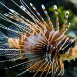 Aquariophile TouF