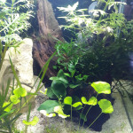 Aquariophile fredeau