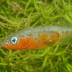 Aquariophile MecDeter