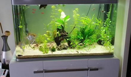Poisson corydoras panda fiche compl te param tres for Aquarium osaka 260