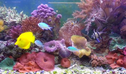 aquarium Récifal méthode DSB