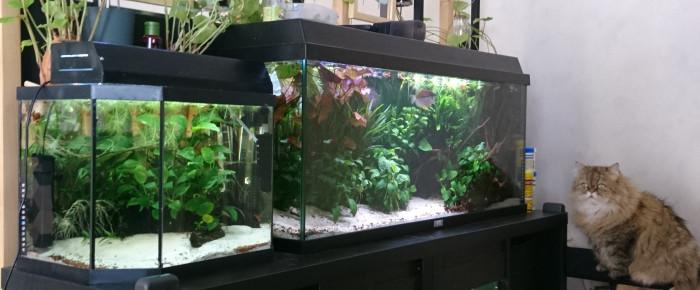 aquarium FISH ROOM , de MarleneMLX