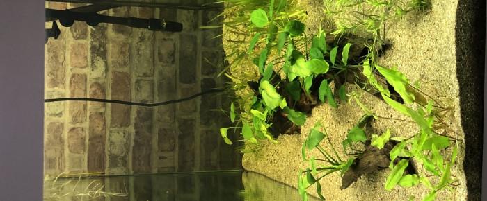 aquarium OSAKA 320 communautaire , de Sandsamanu