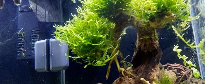 aquarium Crevettes , de Gladys2222