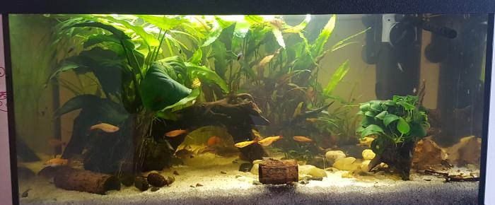 aquarium Little River , de Mevew