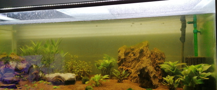aquarium Crevettes betta , de Bat14