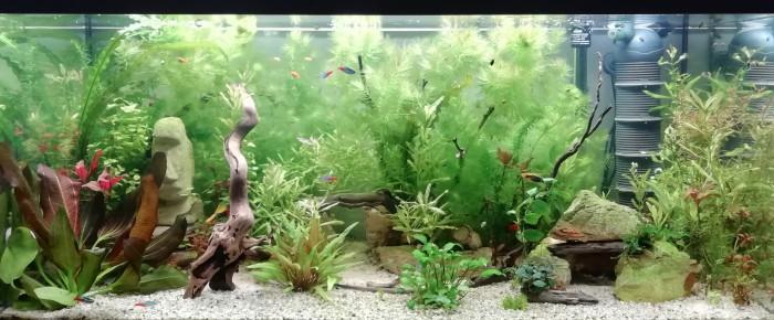 aquarium Nouveau depart , de Jenbru