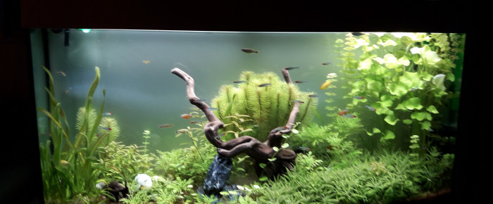 aquarium Juwel  vision 260 , de Reg27