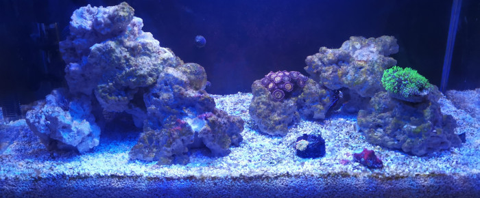 aquarium La Datcha , de Lionel.jo