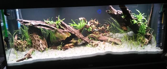 aquarium juwel rio 400 mixte scap-planté , de sylvanere