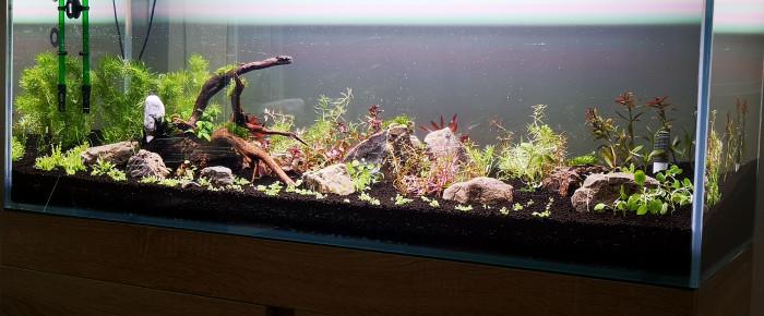 aquarium Aquarium full colors , de Olivoliv