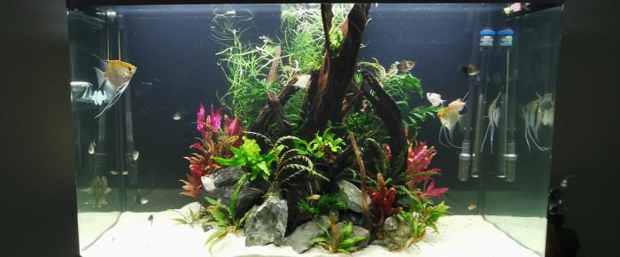 aquarium Amazon Osaka , de ChrisdeReims