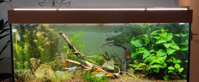aquarium Amaziatique , de Fumarik