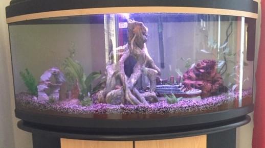 aquarium auarium de lou , de loupette
