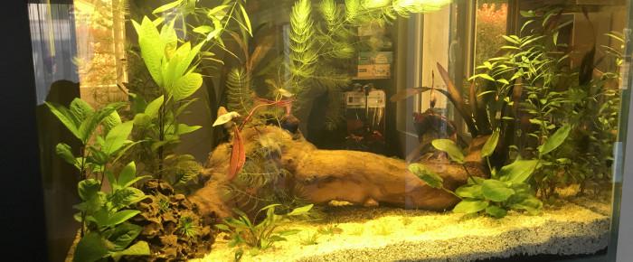 aquarium Mon aqua , de Befara