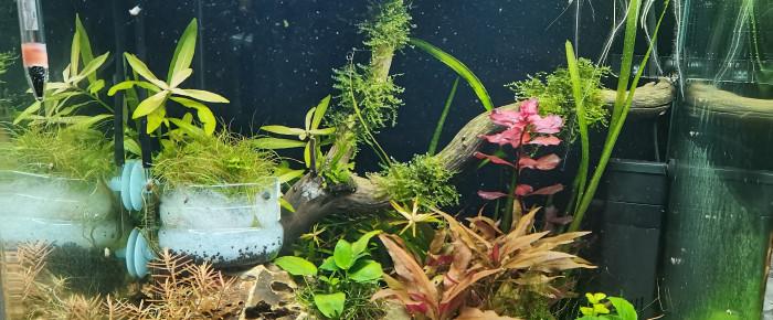 aquarium En lancement 60L CPO boraras , de Kaeris