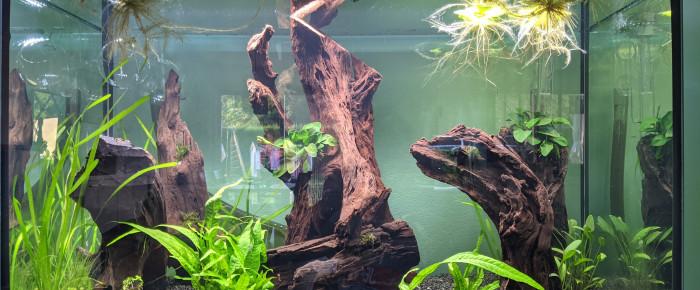aquarium Aquarium , de niedzwiedz-tomasz