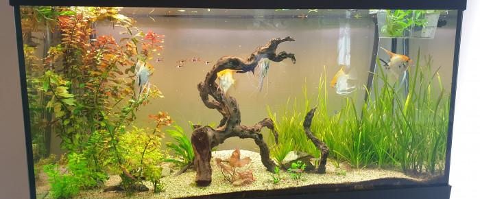 aquarium Aquarium salon , de Toon-collection