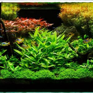 Les vers en aquarium