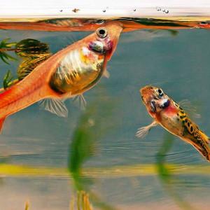 Aliment pour poisson : composition ?