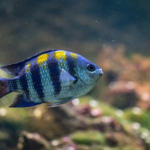 Comment bien choisir ses poissons d'aquarium