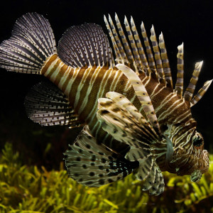 Matrice des compatibilités poissons plantes crevettes