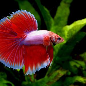 Comprendre nos poissons en 9 points : les réflexes du métabolisme