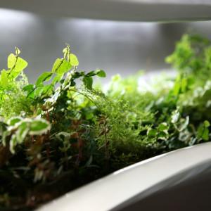 Comment tailler et bouturer nos plantes d'aquarium
