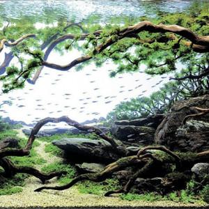 Qu'est-ce que l'aquascaping, cet art en pleine expansion ?