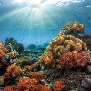 Tu veux un aquarium d'eau de mer mais tu n'y connais rien ?