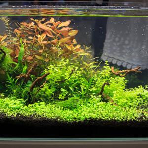 Fertilisation des aquariums plantés